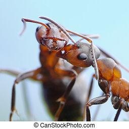 oferta, saludos, hormigas