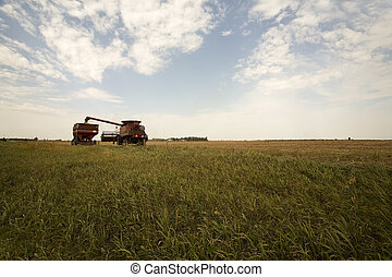 Off Load - A South Dakota farmer off loads Soy Beans at...