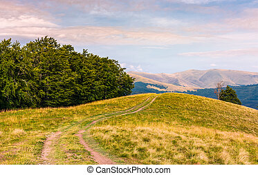 off road trail through hills of Carpathians - off road trail...