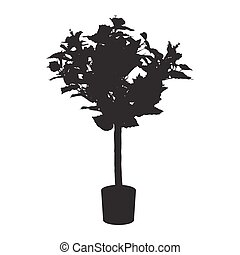 Office and house rose tree silhouette