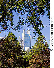 Office Towers Through Trees