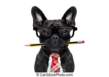 office worker dog - office businessman french bulldog dog ...