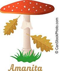 oggetto singolo, fungo