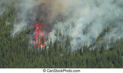 ogień, helikopter, las