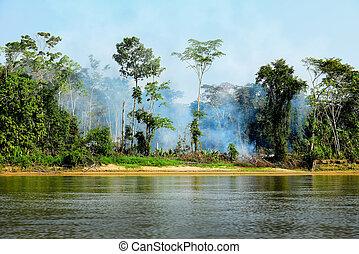 ogień, w, niejaki, dżungla