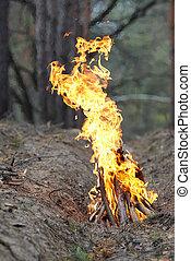 ogień, w, przedimek określony przed rzeczownikami, drewno, na, nature.