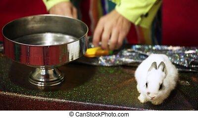 ognisko, królik