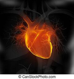 ogniskowany, na, ludzkie serce