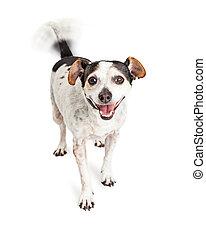ogon, szczęśliwy, mieszaniec, kiwanie, pies