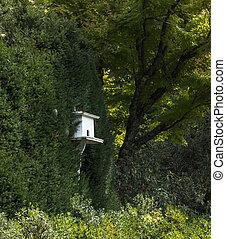 ogród, drewniany dom, soczysty, zielony ptaszek