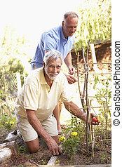 ogród, odprężając, syn, dorosły, starszy człowiek