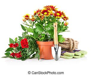 ogród, rośliny, z, kwiaty, róże, i, equipments