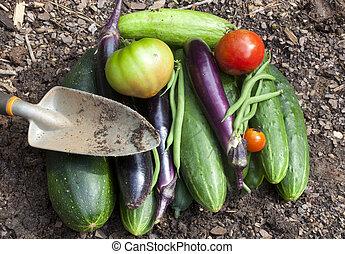 ogród, warzywa