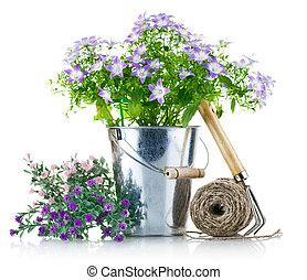 ogród, wyposażenie, z, fioletowe kwiecie, i, zielone listowie