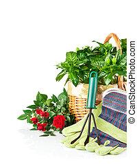 ogród, wyposażenie, z, kwiaty, i, zielony, rośliny