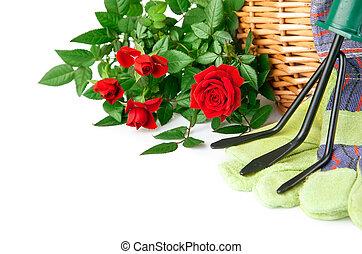 ogród, wyposażenie, z, róża, kwiaty