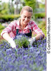 ogrodowy środek, kobieta, w, lawenda, flowerbed, uśmiechanie się