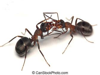 oh, darling. warm greetings of ants
