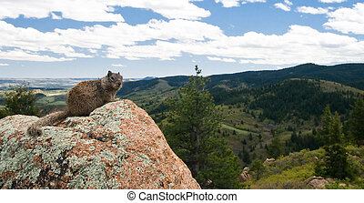 Oh Nice Marmot - A marmot poses on a rock outcrop along the...