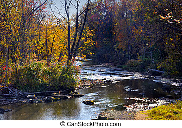 Ohio Forest in Fall