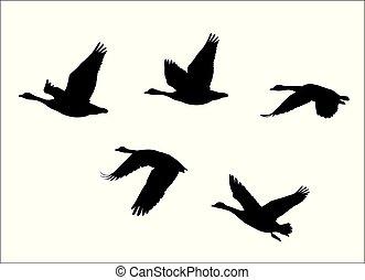 oie, canada, voler, oies, canadien