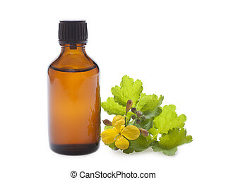 Oil celandine herbs in a dark bottle on a white background