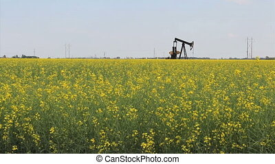 Oil Derrick In Canola Field