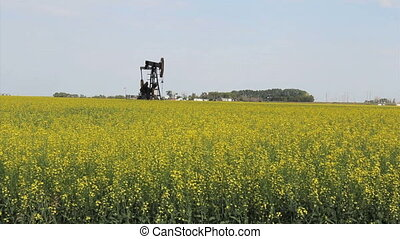 Oil Derrick On Canadian Farm - A lonely oil pump works...