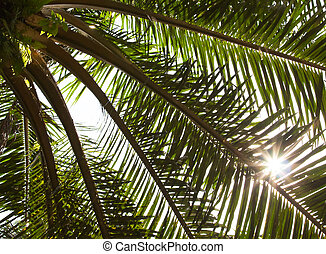 Oil Palm fronds with sunburst - Closeup of tropical oil palm...