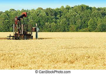 oil pump in a wheat field on a summer day