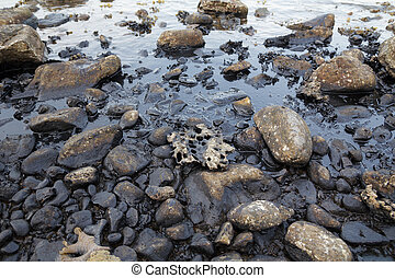 Oil spill on the sea shore
