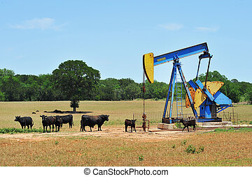 West Texas oil well pumper and black brama cattle.