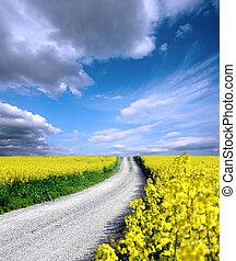 oilseed