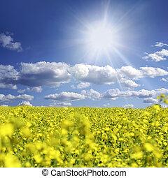 oilseed, und, wolkenhimmel