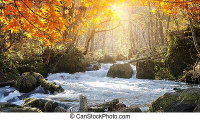 oirase, évad, folyó szurdok, druing, ősz, gyönyörű, japán