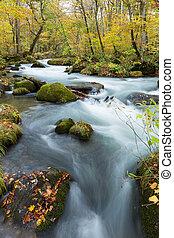 Oirase Stream in autumn of Japan