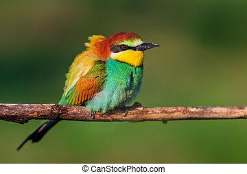 oiseau, beau, branche, sauvage, assied