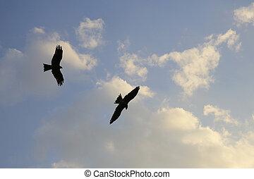 oiseau bleu, essor, ciel, regarder