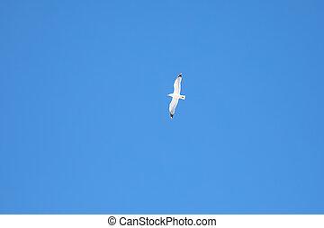 oiseau, ciel bleu