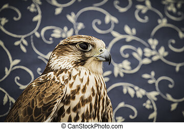 oiseau, concept, moyen-âge, peregrine, vie sauvage, faucon