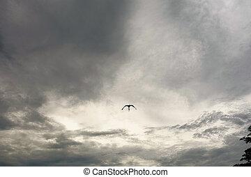 oiseau, et, ciel
