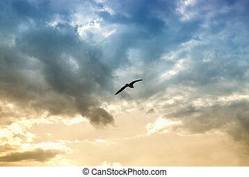 oiseau, et, dramatique, nuages