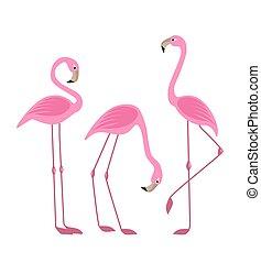 oiseau, exotique, flamants rose