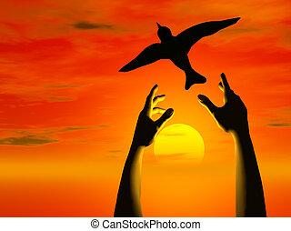 oiseau, gratuite