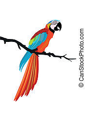 oiseau, perroquet