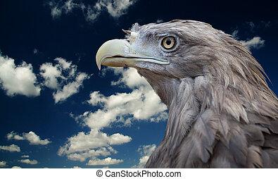 oiseau, prey.