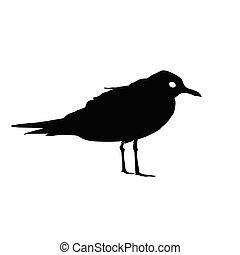 oiseau, silhouette, isolé, vecteur, noir, blanc, mouette, arrière-plan., illustration