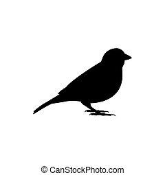oiseau, silhouette, moineau, vecteur