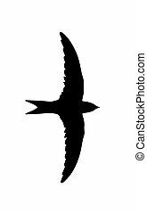 oiseau, silhouette, (swallow), martlet