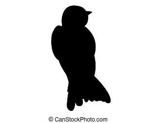 oiseau, vecteur, silhouette, hirondelle